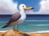 seagull-web
